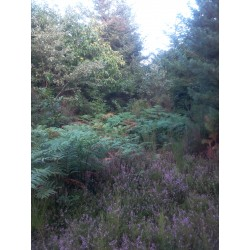 Forêt de Planal, Aude (11)